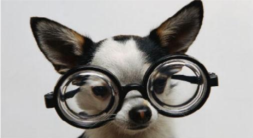 低血糖探知犬